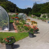 Double Take: The Dublin allotment that was once the Guinness family's vegetable garden