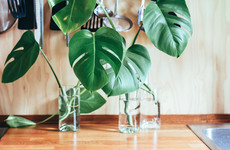 Staying alive: 6 striking plants to bring green into your home (even if you don't have green fingers)