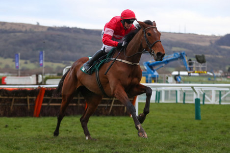 Laurina and Paul Townend on their way to winning the Mares' Novices' Hurdle at last year's Cheltenham Festival.