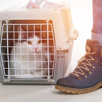 If you plan to travel to the UK with your pet after a no-deal Brexit, here's what you'll need