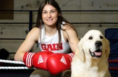 Your Katie Taylor Dog Food Image of the Day