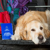 Government to award €80k contract for 75,000 pet passports