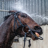 Tiger Roll set for Grand National repeat in bid to emulate the legendary Red Rum