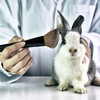 This is what China's new animal testing laws mean for the beauty industry