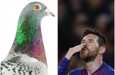 How much did the 'Lionel Messi of pigeons' sell for? It's the week in numbers