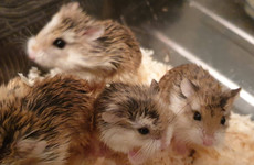 'Disgusted at this callous act': Seven baby hamsters dumped outside Newry pet shop
