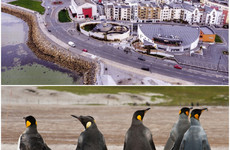 Appeal lodged after council rejects plan for a penguinarium in Galway