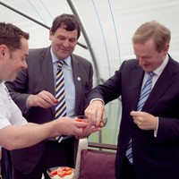Fruity and Delicious Taoiseach with Strawberries of the Day