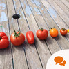 From the Garden: 'Growing tomatoes is a hobby that became an obsession and then spiralled out of control into a mania'