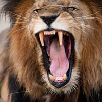 Poacher killed by elephant then eaten by lions in South Africa