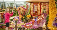 In pictures: The Chelsea Flower Show