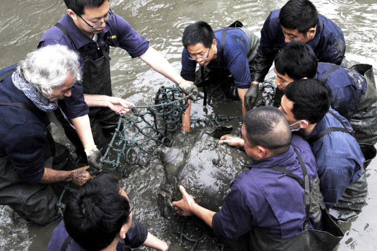 Researchers lift the turtle out of the water.
