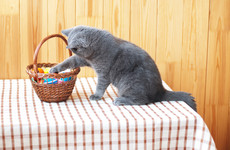 Pet owners urged be wary over Easter as experts warn of poisoning risks