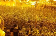 Cannabis worth €800,000 seized after 'substantial' grow house found at Waterford industrial estate