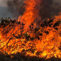Gardaí investigating after gorse fire destroys house in Co Donegal