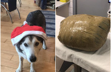 Kennel owner receives death threats after husky returned to owner wrapped in duct tape