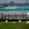 Complaint upheld after Aer Lingus advert about cost for pet travel 'likely to mislead'