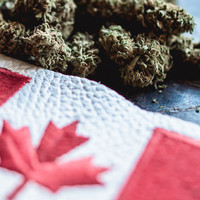 First-time cannabis users on the rise in Canada since legalisation