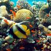 'We're in trouble': Landmark UN report details unprecedented decline in nature