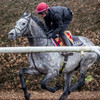Gold Cup hope Capri out to give O'Brien fifth successive Saval Beg triumph at Leopardstown