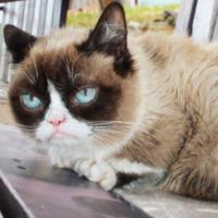 Online celebrity Grumpy Cat dies aged 7