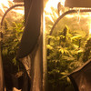 Man (40s) arrested after cannabis worth over €60,000 seized in Kildare