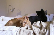 Man divorces wife after she brings home 550 cats