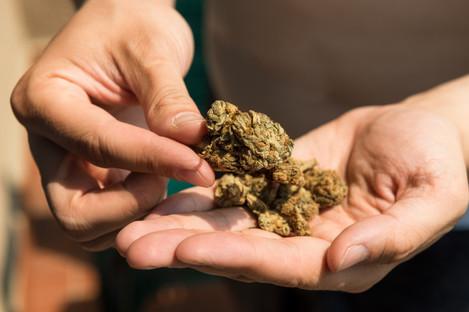 File photo. Cannabis