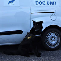 Garda dog Lazar locates suspect in ditch after attempted carjacking at knifepoint in Cork