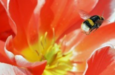 UK has a 'plan bee' to re-introduce extinct species