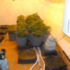 Man charged after estimated €127,000 worth of cannabis plants and herb found in Meath