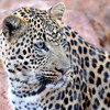 Toddler killed by leopard in South African national park