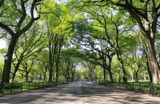 Sitdown Sunday: The victims of the real Central Park Five attacker speak out