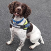 Detector dog Robbie helps seize €500,000 worth of herbal cannabis at Dublin Port