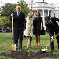 A 'friendship tree' planted by Trump and Macron last year has died