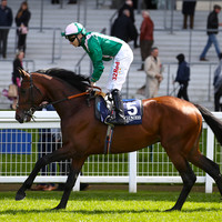 Weekend Tips: Son of Sea The Stars can swell the coffers ahead of Ascot