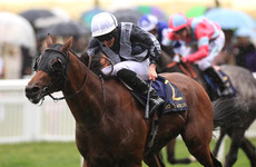 Circus Maximus and Aidan O'Brien celebrate record win at Royal Ascot