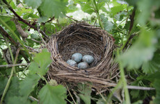Man convicted and fined for chopping down hedges during bird nesting season
