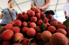 A mysterious brain fever linked to lychees has killed over 100 children in India
