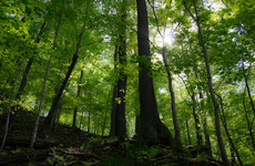Coillte to redesign nine Dublin forests for recreational uses and to support biodiversity