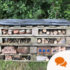 From the Garden: Build your own insect hotel and bookings will start rolling in