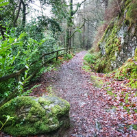'You'll hear the crashing river as you approach': 6 family-friendly walks and hikes around Ireland