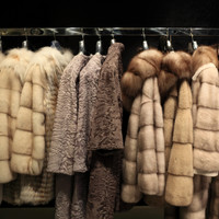 Government plans to 'phase out' fur farming in Ireland