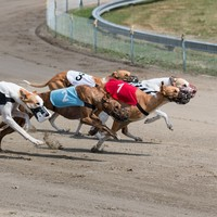 Almost 6,000 greyhounds killed in Ireland every year, new RTÉ documentary reveals