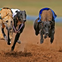 Irish Greyhound Board 'strongly condemns actions of minority in industry'