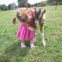 Sleep Here: Make friends with donkeys, lambs, ducks and geese on Meath's Kiltale Farm