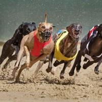 Irish Greyhound Board promises reforms in wake of RTÉ documentary revelations