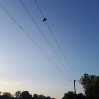 Man electrocuted after trying to retrieve drone from power line