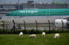 Aer Lingus customers sleep overnight at Lisbon Airport due to cancelled flight