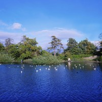 Warning signs ordered for pond in Dublin's Bushy Park after dog killed by swan